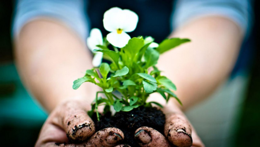 chemical-free gardening