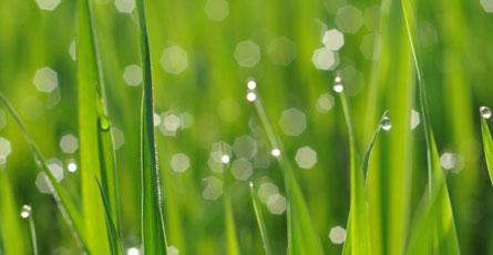 grass-cuting